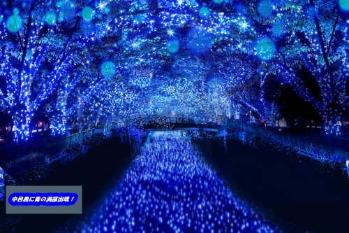中目黒青の洞窟2014の場所やイルミネーションの動画を紹介!今後継続は?